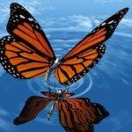 Гармонические модели: торговля Паттерном Бабочка